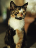 Portrait of a Calico Cat Photographic Print by Stephen Alvarez