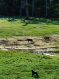 Variety of Animals Forage in a Rain Forest Clearing Photographic Print