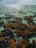 Ancient Stromatolite Reefs Still Flourish in High Saline Shark Bay Photographic Print by O. Louis Mazzatenta