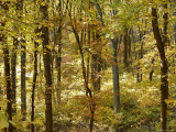 Autumn-Hued Trees in a Woodland Setting Photographic Print by Charles Kogod