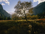 View of a Meadow in Yosemite National Park Photographic Print by Melissa Farlow