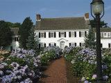 Blooming Hydrangeas Lining a Homes Walkway Photographic Print by Darlyne A. Murawski