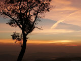 Sunrise Frames a Solitary Tree at the Hazel Mountain Overlook Photographic Print by Charles Kogod