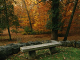 A Bench in a Wooded Setting of Trees in Fall Foliage Photographic Print by Melissa Farlow