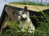 A Cat Perches on a Sod-Covered Roof Photographic Print by Sisse Brimberg