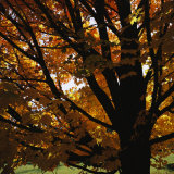 Leaf Color Change in Whitnall Park Photographic Print by Paul Damien