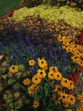 A Flower Bed Grows Near Milwaukees Lakefront Photographic Print by Paul Damien