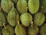Spiny Green Durian Fruit Sold at a Market Photographic Print by Todd Gipstein
