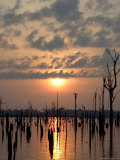 Sunset over Balibina Lake Photographic Print by Nicole Duplaix