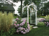 Arbored Entryway with Ornamental Grasses and Blooming Hydrangeas Photographic Print by Darlyne A. Murawski