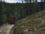 A Log Truck Hauls Wood from a Clearcut in the Salmon National Forest Fotoprint van Joel Sartore