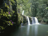 Rainforest View with Waterfall and Red Flowers Photographic Print by John Dunn/Arctic Light