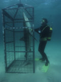 Humorous Photo of a Diver Observing a Shark in a Shark Cage Photographic Print