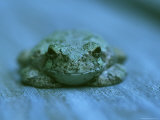 A Toad Resting on a Wooden Plank Photographic Print by Darlyne A. Murawski