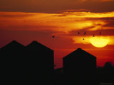 Sandhill Cranes Over Barns Silhouetted against an Orange Sky Photographic Print