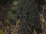 An Orb Weaving Spiders Web Among Weeds Photographic Print by George Grall