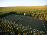 A Tennis Court Carved from a Cornfield Impresso fotogrfica por Joel Sartore