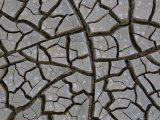 Mud Cracks Form When Streams or Lakes Dry up During Droughts Photographic Print by Peter Carsten