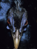 A Close View of the Head of a Species of Bornean Pheasant Photographic Print by Peter Carsten