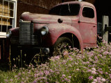 Crown Vetch Flowers, a Barn, and a Vintage Truck Add Local Color Photographic Print by Stephen St. John