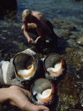 Turban Shells (Family Turbinidae) Found at the Klasies River Site Photographic Print by Ira Block