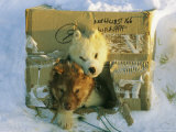Two Canadian Eskimo Puppies Peek Out from Their Cardboard Shelter Photographic Print by Norbert Rosing