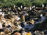 Cat Among Tourist Trash, Galapagos Islands Photographic Print by Steve Winter