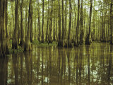 Cypress Trees Reflected in the Green Waters of Bayou Long, Louisiana Photographic Print