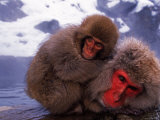Mother and Baby Japanese Macaques(Snow Monkeys) Bathe in Hot Springs Photographic Print by Roy Toft