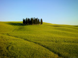 Cypresses in a Wheatfield Photographic Print by Raul Touzon