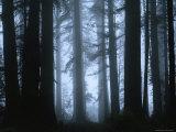 Shrouded in Mist, the Trunks of a Crowd of Giant Redwoods Soar, Redwood National Park, California Fotodruck von James P. Blair