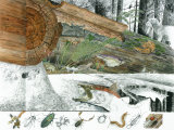 Cutaway Painting of a Dead Douglas Fir Log; It Supports an Immense Colony of Small Life Photographic Print by Jack Unruh