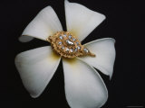 A Gold and Diamond Belt Ornament Rests on a Fragrant Plumeria Blossom Photographie par Sisse Brimberg