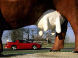 The Udder of a Huge Concrete Cow Frames a Passing Red Sportscar Photographic Print by Stephen St. John