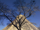 El Castillo Pyramid and a Bare Tree Photographic Print by Raul Touzon