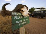 Cape Buffalo Horns Atop an Entry Sign to Tarangire National Park Photographic Print by Roy Toft