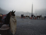 Carriage Horses Munch Bags of Oats in St. Peter's Square, Vatican City Photographic Print by James L. Stanfield