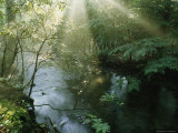 Sunlight Highlights a Small Creek in the Great Smokies, Tennessee Fotoprint van James P. Blair