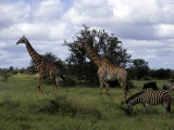 Animals Cohabitate on the Plains of Kruger National Park, Republic of South Africa Photographic Print by Stacy Gold