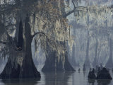Spanish Moss Drapes Old Cypress Trees on Lake Verret, Louisiana Photographic Print