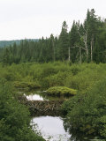 A Beaver Dam Blocks a Forest Stream in the Wilderness of Quebec Photographic Print by Taylor S. Kennedy