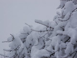 Snow Accumulates on Small Branches, Chevy Chase, Maryland, United States Photographic Print by Stacy Gold