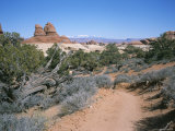 A Hiking Trail Through Canyonlands National Park Photographic Print by Taylor S. Kennedy