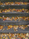 Autumn Leaves Lie on House Steps Giving Color to the Drab Cement, Washington, District of Columbia Photographic Print by Taylor S. Kennedy