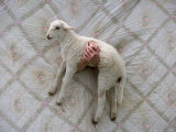 A Katahdin Lamb Being Held in Front of a Quilt at a Farm in Kansas Photographic Print by Joel Sartore