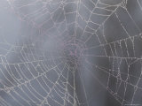 A Close View of Water Drops on a Spider Web Photographic Print by Taylor S. Kennedy