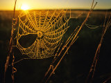 Spider Web at Sunrise, Fort Niobrara National Wildlife Refuge, Nebraska, USA Photographic Print by Chuck Haney
