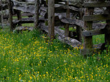 Rail Fence and Buttercups, Pioneer Homestead, Great Smoky Mountains National Park, Tennessee, USA Photographic Print by Adam Jones