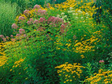 Black-eyed Susans and Sweet Joe-Pye Weed in the Holden Arboretum, Cleveland, Ohio, USA Photographie par Adam Jones
