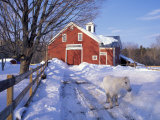 Pony and Barn near the Lamprey River in Winter, New Hampshire, USA Photographic Print by Jerry & Marcy Monkman